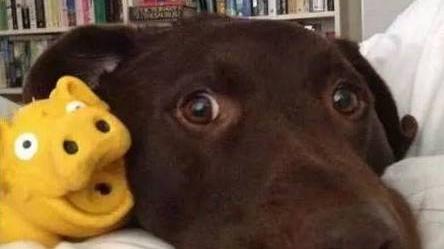 养狗后,你早上都是怎么醒的?
