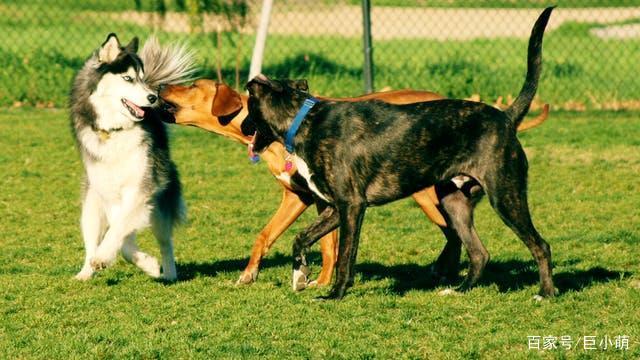 欧美性爱狗_反驳不给狗狗绝育的10个理由,主人所认为的完整狗生