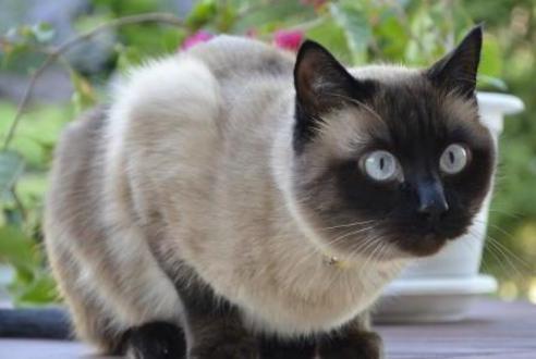 盘点四种最难养的猫咪,大橘猫上榜!