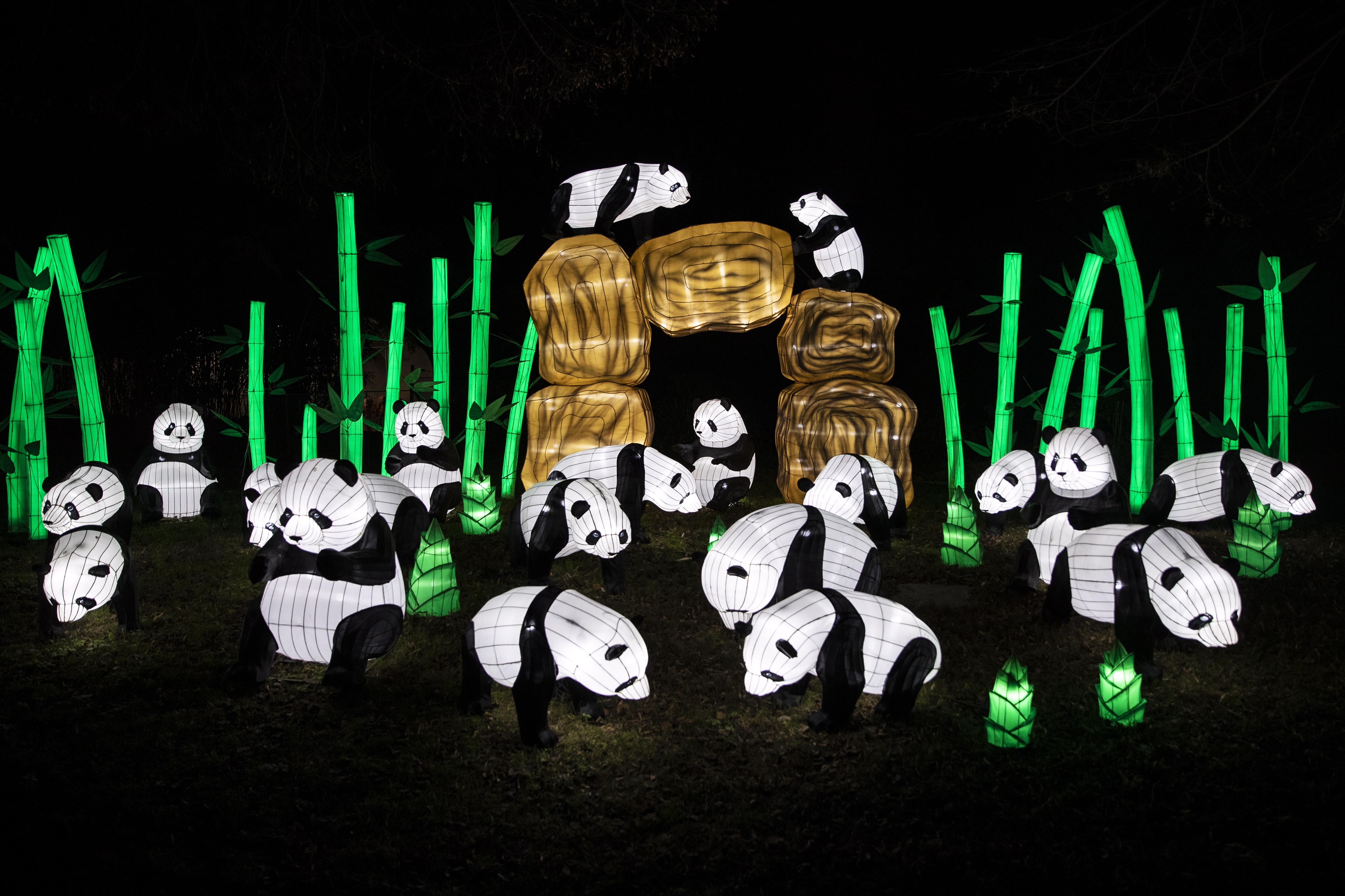 巴黎举办濒危动物彩灯展