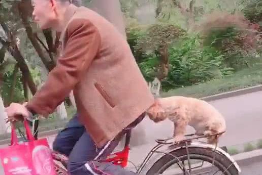 偶遇老大爷骑车,后座上坐着一条小狗,狗:看什么看,没见过狗啊