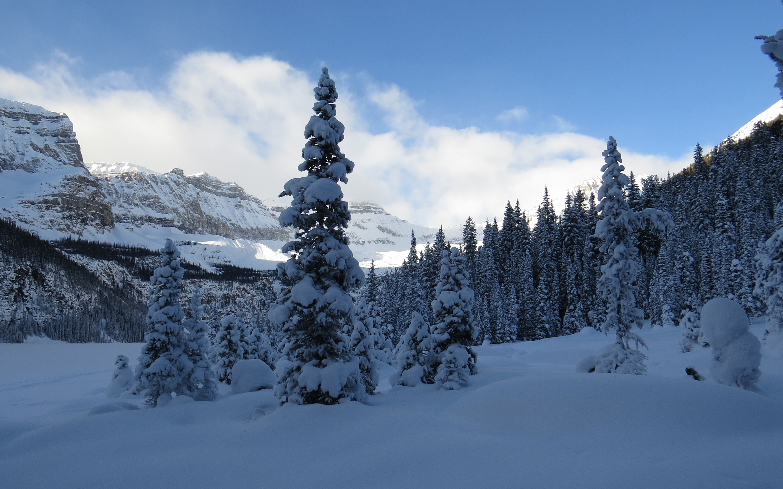 冬天到了,树木银装素裹,高清壁纸,风景电脑高清壁纸