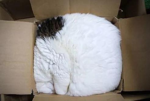 嗯没错了,我家的猫咪是液体做的!