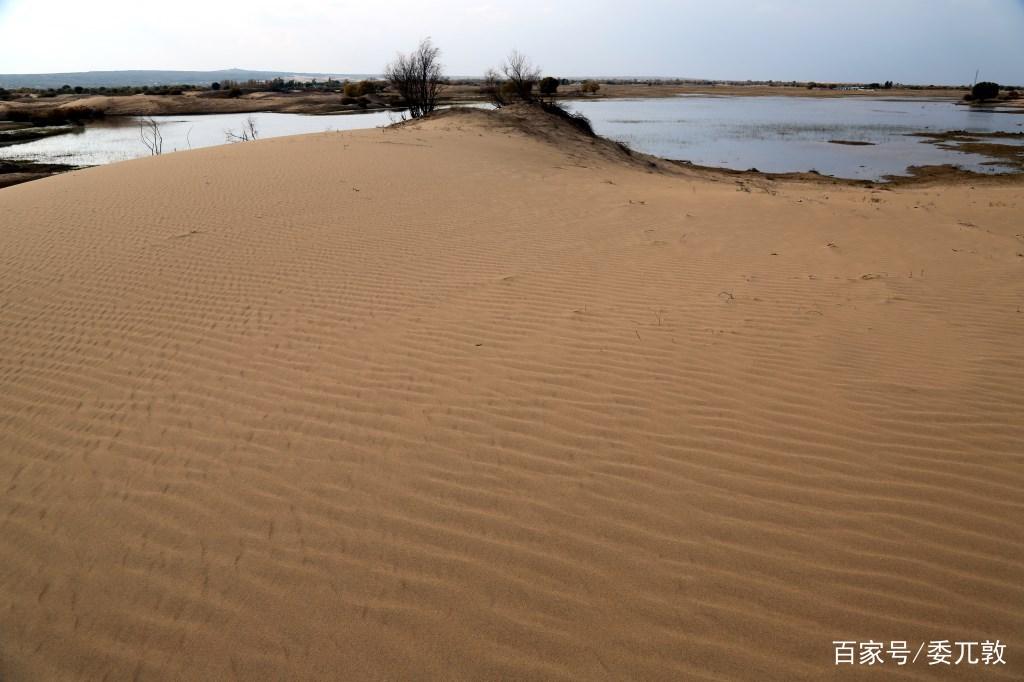 乌审嘎鲁图镇布寨嘎查秋天的沙漠沼泽地风景二十五