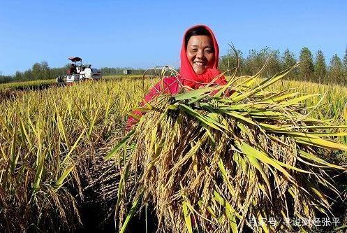 中国粮食连年丰收 为啥还要依赖进口?
