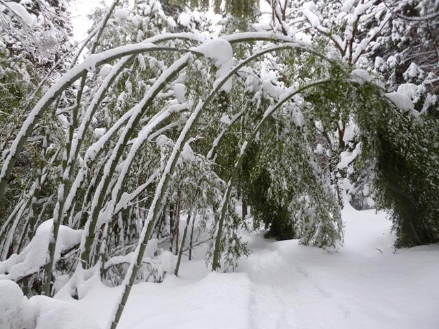 三首描写雪景的古诗词:白居易的雪最大,孙道绚的雪最轻盈