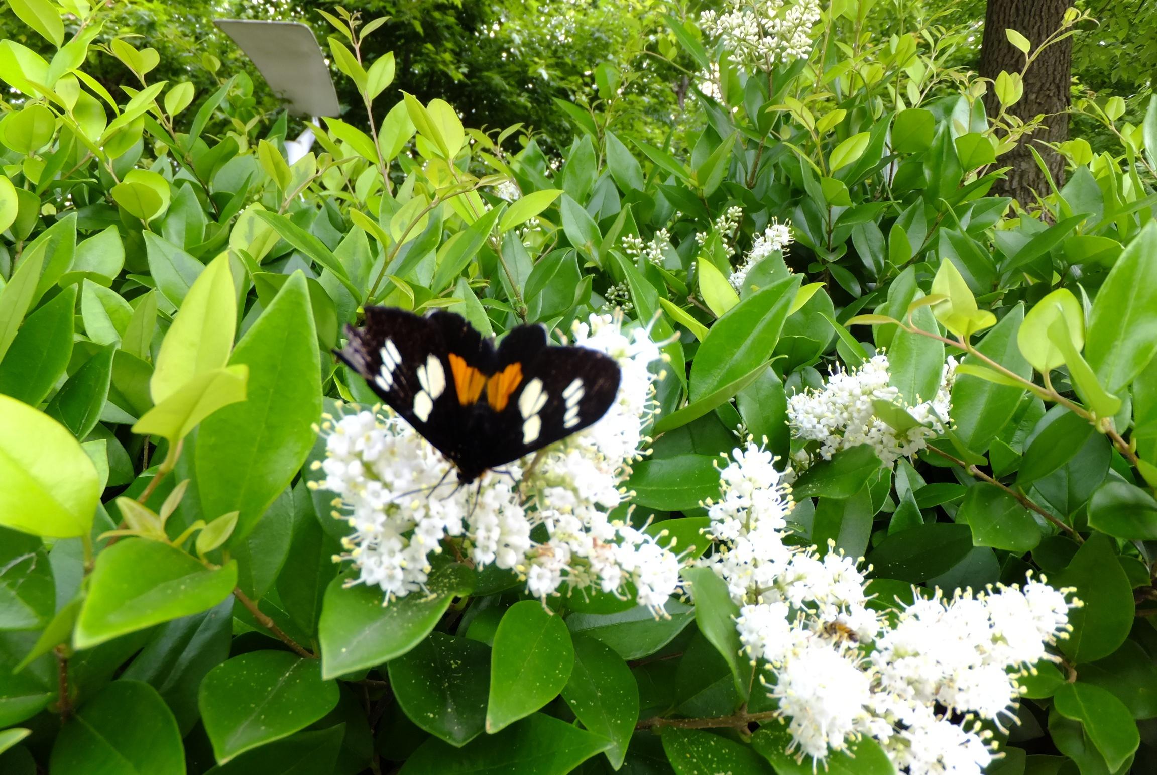 武汉植物园看桃花盛开,再不出门就晚啦!