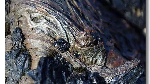 品味五大连池的火山石头,有一种深深的震撼
