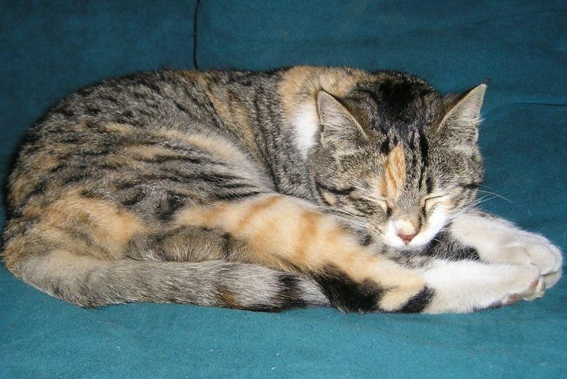 动物睡觉会做梦吗?会,而且还很复杂,与记忆有关