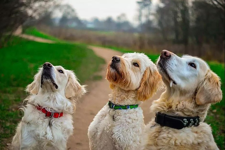 狗主人必知的事:狗狗疯狂掉毛除了换季原因,还有可能是危险信号