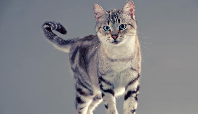 可爱淘气猫咪图片