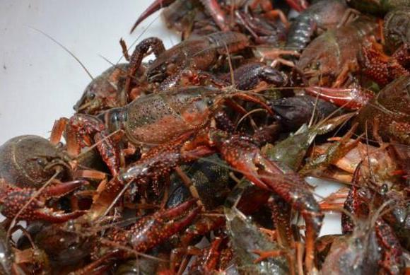 """男子遭小龙虾""""托梦"""":小龙虾需要解救 花了七八万结局很尴尬"""