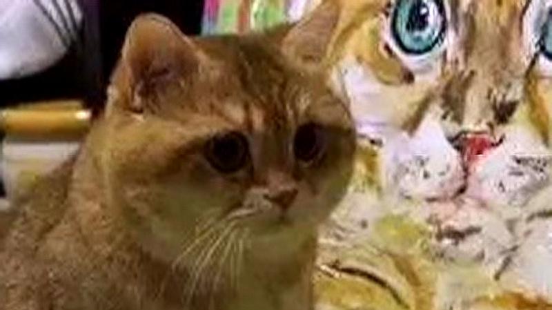 阿拉丁神灯可以许愿送猫咪了?