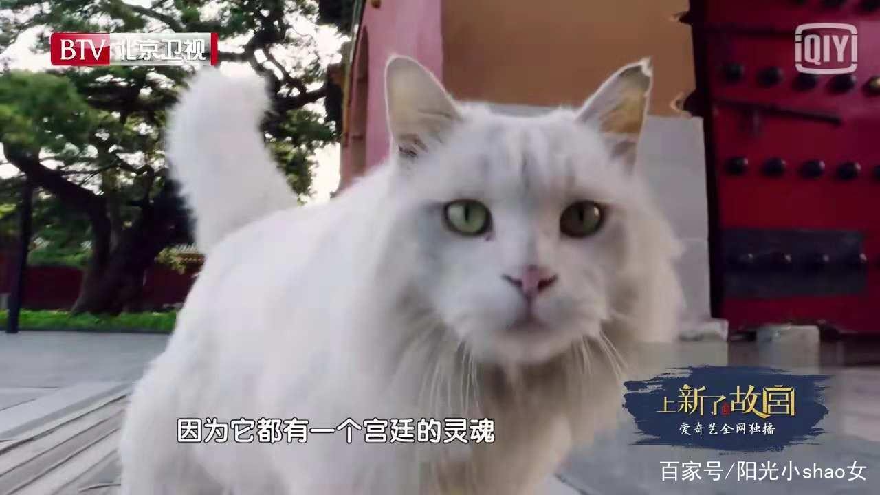 这也是故宫里的一只猫,颜值真高.