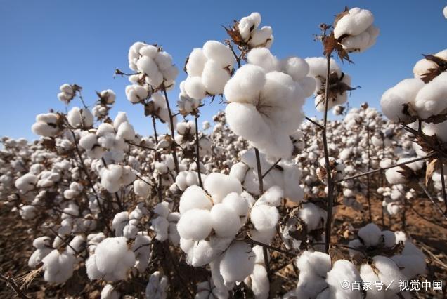 美国市场下跌!国内棉花大幅上涨!背离的原因?看完就明白了