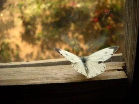 生命如此短暂:我们没有时间争吵和伤心,只有时间去爱!