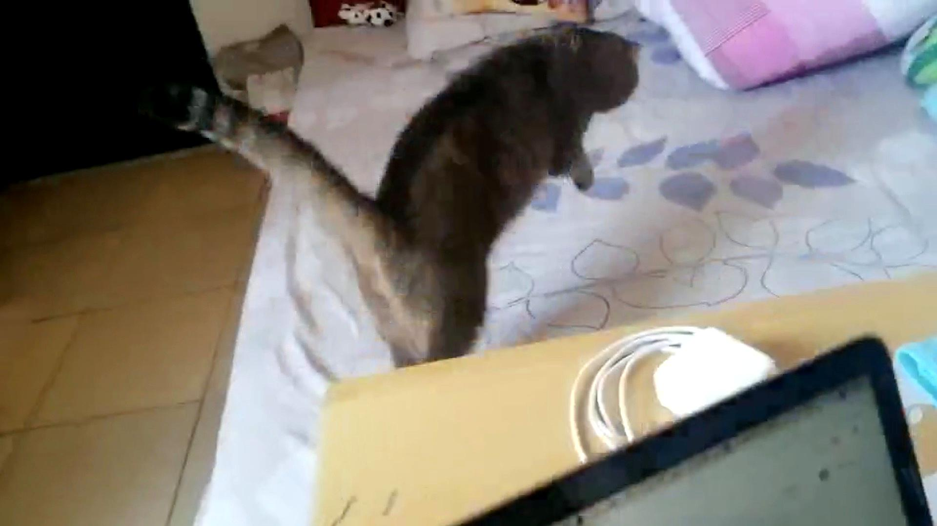 """主人在床上布置胶带陷阱,猫咪跳上去之后炸了,就像""""车祸现场"""""""