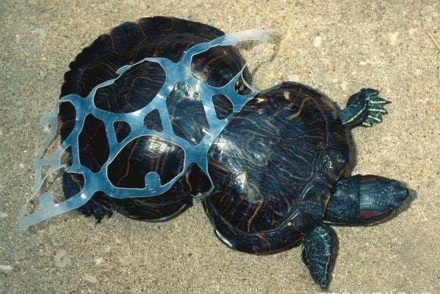 """寿司馅里添塑料袋还能吃吗?愿鲸鱼胃里""""80斤塑料""""事件不再重演"""