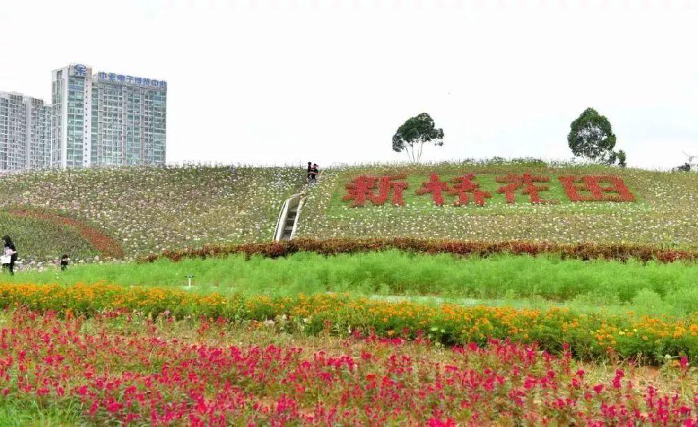 深圳最适合一日游的免费景点,去过5个你就是深圳通!