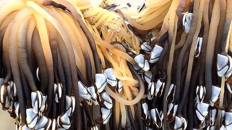 最贵的海鲜之一:近一万元一斤,渔民们为了它起早贪黑!