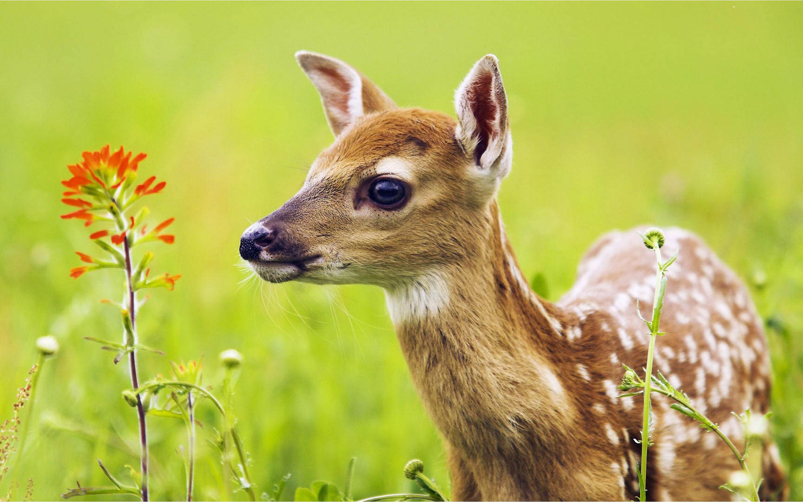 壁纸 动物 鹿 2560_1600