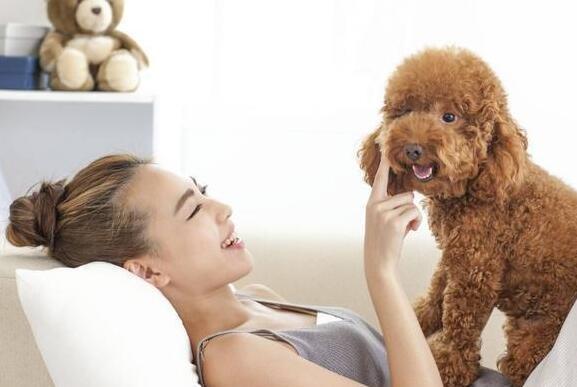 """就算你不想和""""泰迪犬一起睡觉"""",有五件事你都该知道!"""