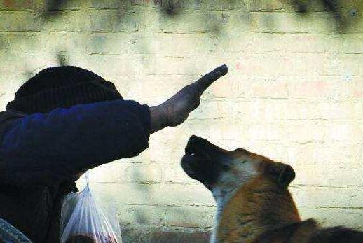 狗狗最担心主人对它做这些事,会让它不知所措,你做过几件?