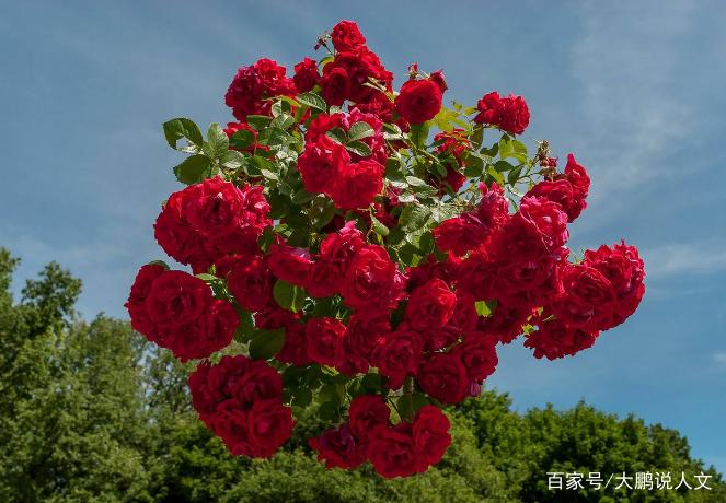 美丽的花朵艳而不俗,好想有一朵这样的花,好好看啊,五颜六色的花朵真图片