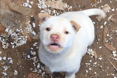 小流浪狗本来觅食,不料被好心人留下,得知狗狗来历网友分分叫好