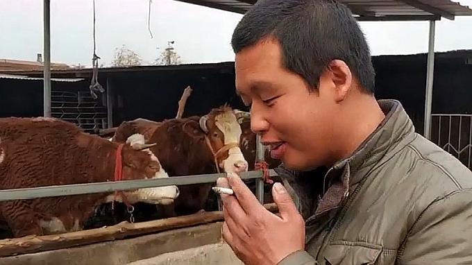 实拍30岁小伙投资十万养牛挣钱吗?小伙一番话太有水平了!