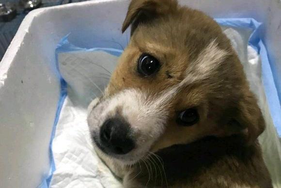 流浪狗受伤躲进垃圾堆,女子发现一路捧着纸箱送其救治:感恩有你
