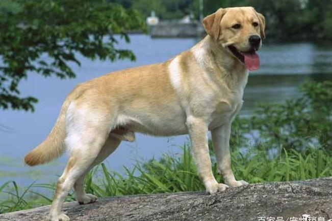 """服从性特别强的5种狗,尤其是第五种,它把主人的话当""""圣旨"""""""