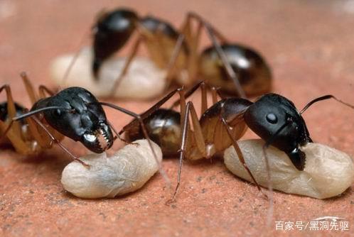 蚂蚁视人类如神,宇宙中是否存在比人更高级的文明?