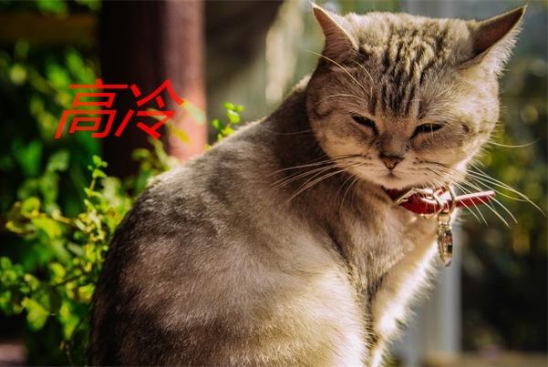 猫咪高冷,时常感觉猫咪不喜欢自己,其实猫咪是行动派