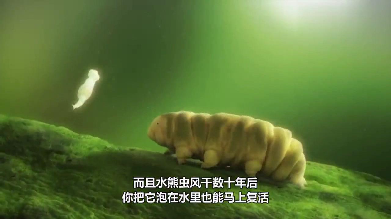 地球上最古老的的生物,煮不烂也冻不死,已经存活5亿年!