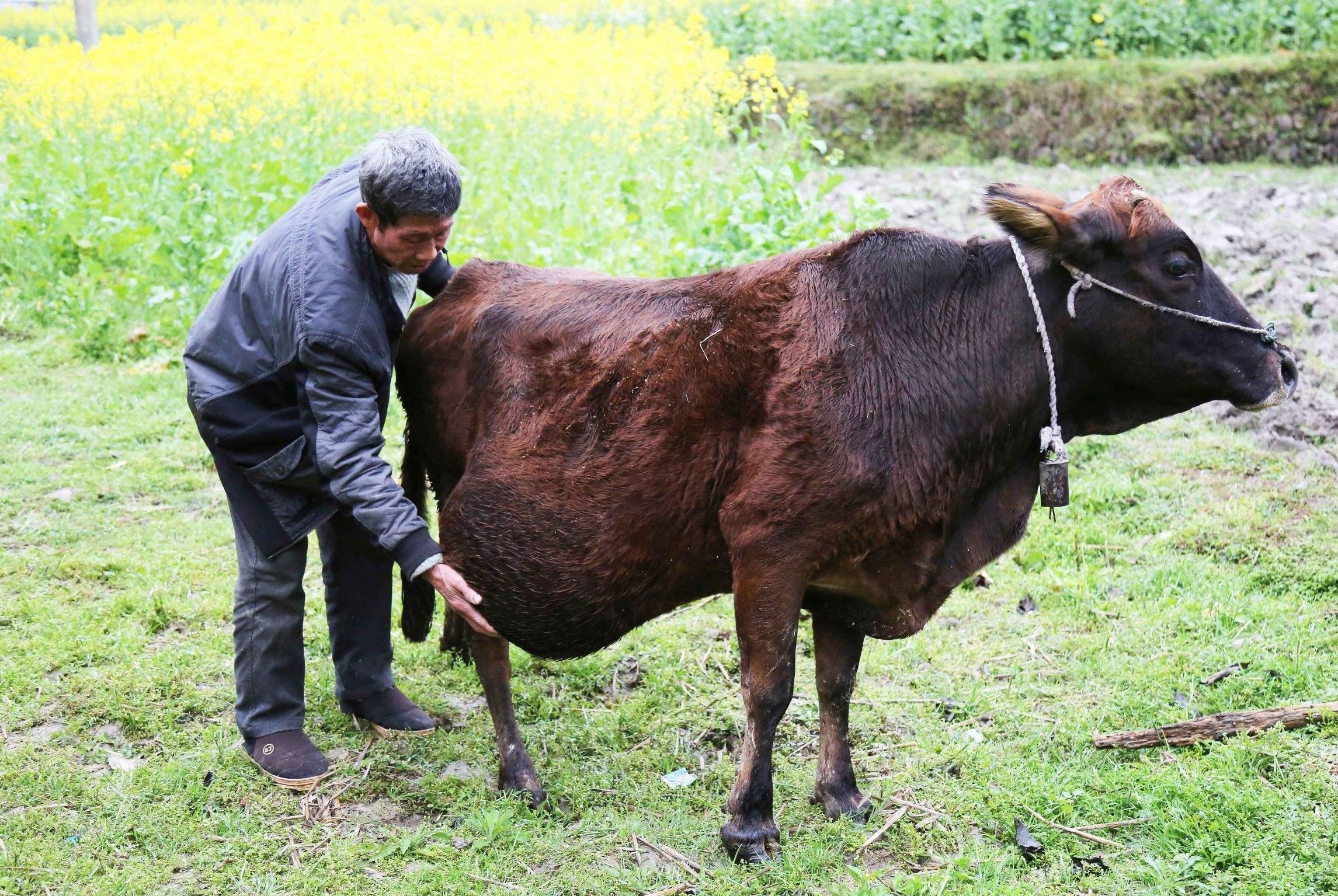 """农村俗语:""""冬至出日头,秋收累死牛"""",啥意思,你懂吗?"""