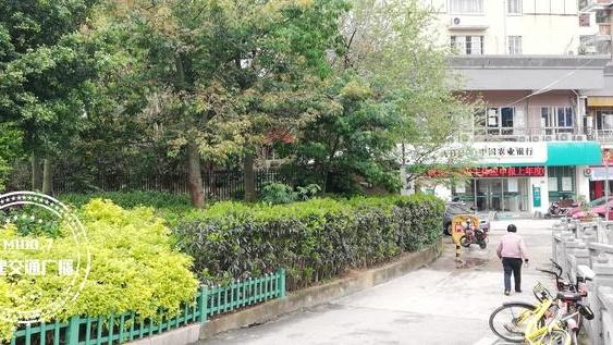 """城市绿地养鸡鸭?福州一老伯任性做法 附近住户""""有点难受""""!"""
