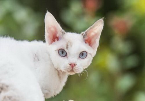 猫猫图片大全可爱动态壁纸
