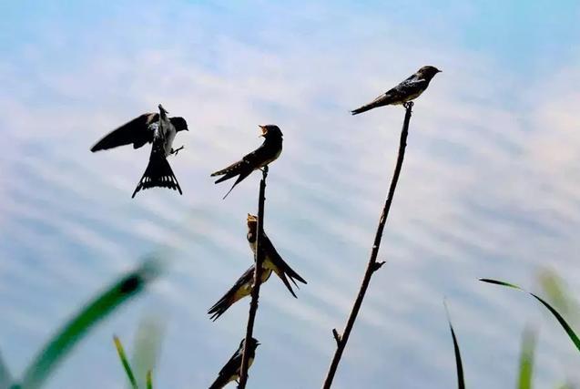 春燕,是一首归家的诗