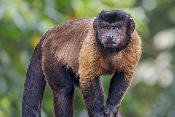 耶鲁大学专家教猴子如何花钱,它们学会了买食物