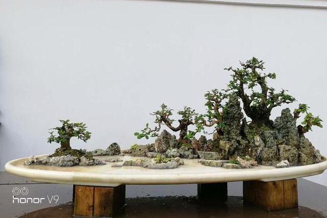 大师专栏I 刘传刚的第100场盆景创作实录,手把手学做水旱盆景