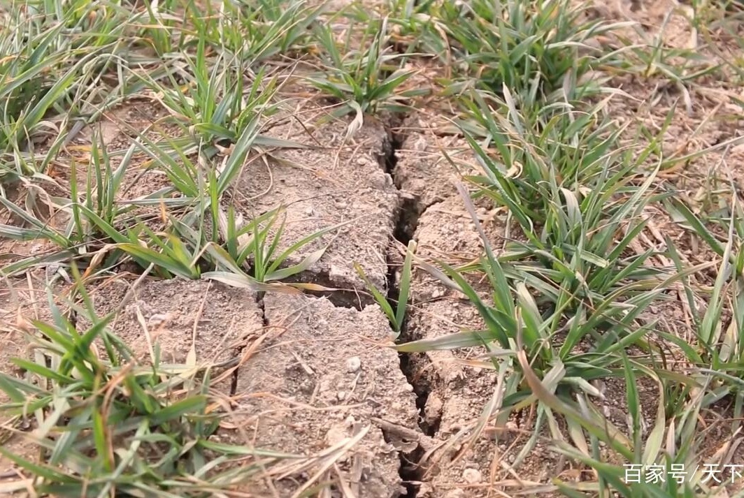 小麦春季肥水管理要分类
