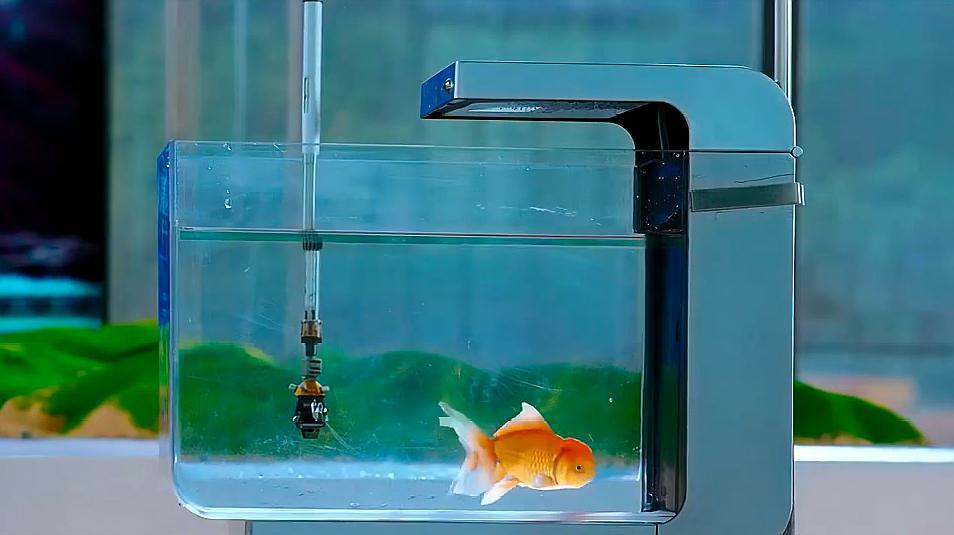 《美人鱼》中,商人为了赶走海洋的鱼类,利用声呐,看了实在残忍