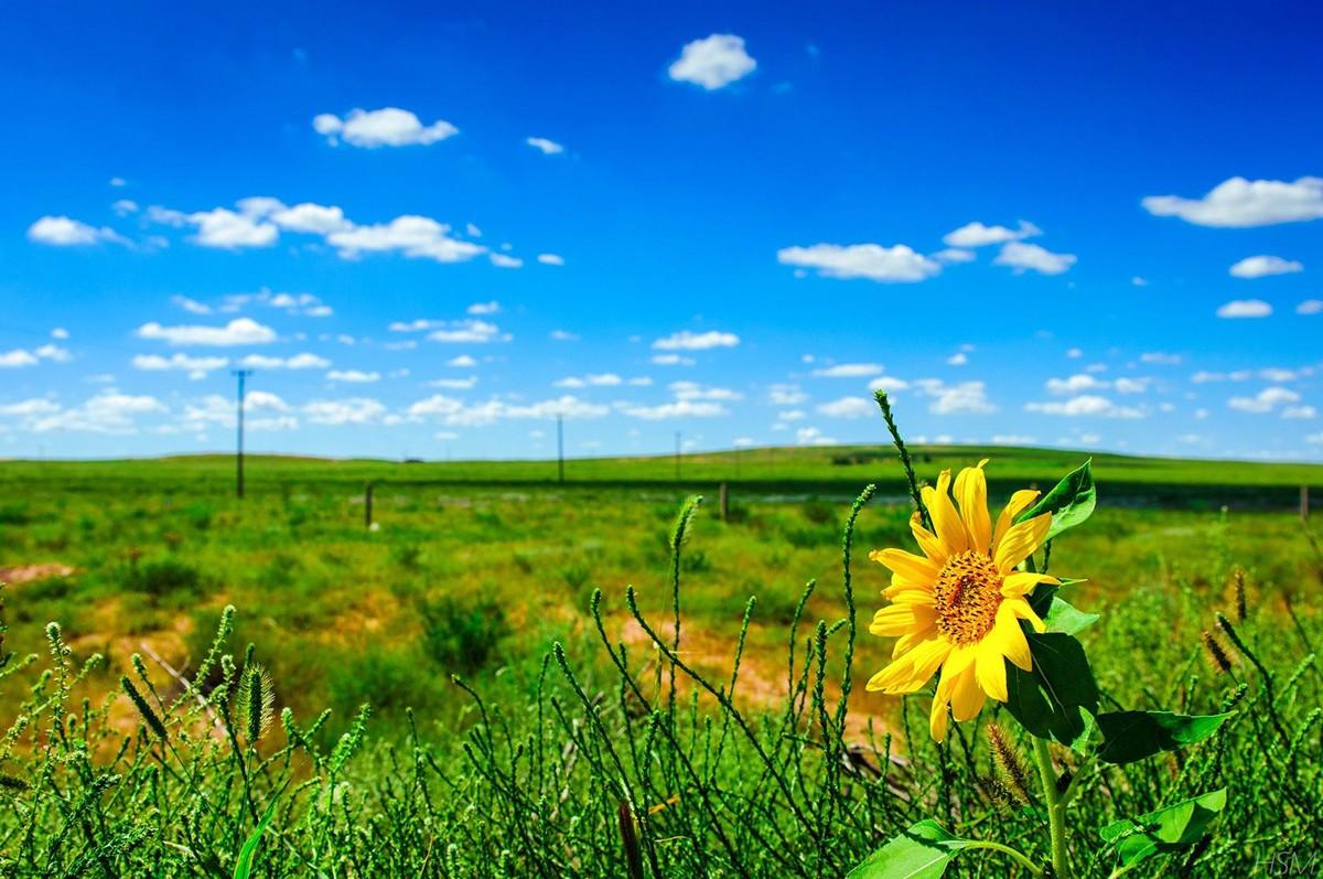 世界最美草原,到内蒙古旅游去哪玩,这8个旅游景点驴友强烈推荐!