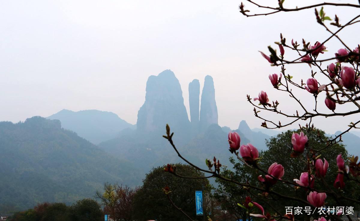江郎山的風景優美,讓我心曠神怡,風景優美,文化發達,真可謂人文薈萃!