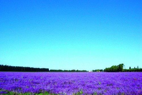 """我国最""""令人向往""""的草原,风景美如画,一生要去一次的地方"""