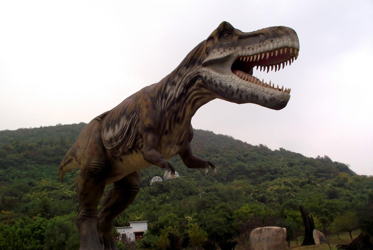 进化中的人类不存在吗?为何我们找不到化石?