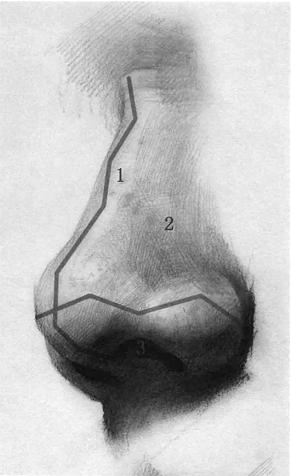 素描五官鼻子的画法及重点讲解
