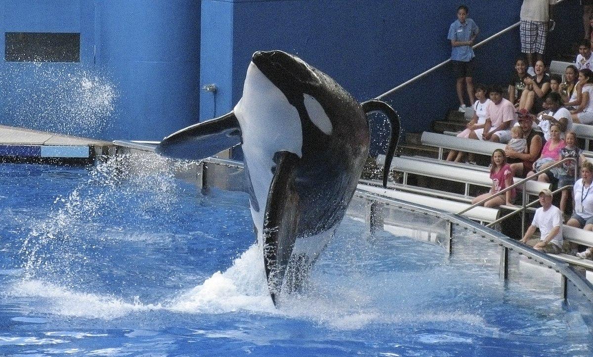 保加利亚海豚宝宝出生仅9天就被迫表演,观众面前过劳死亡