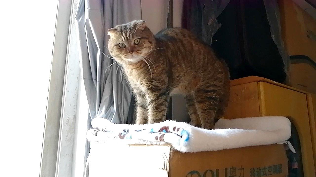 """猫听到主人失业赶紧去吃猫粮,吃完头也不回地走了""""再找户人家"""""""